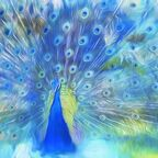 The peacock: a symbol of both spirituality and pride