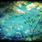 https://www.flickr.com/photos/dreamworld30