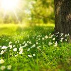 https://pixabay.com/en/spring-tree-flowers-meadow-wood-276014/
