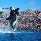 The free teaser image can be seen at http://en.wikipedia.org/wiki/Shamu_(SeaWorld_show)#mediaviewer/File:2009-Seaworld-Shamu.jpg