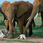 from elephantaday2.blogspot