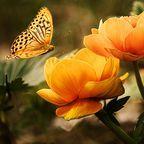 Larisa-K/Pixabay