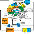 Brain Neurocircuitry: Vago DR and Silbersweig DA