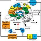 Brain Neurocircuitry: Vago DR and Silbersweig DA
