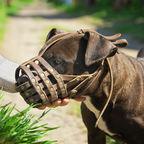 G_O_S/Shutterstock.com