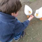 """Boy_Feeding_White_Ducks"" by Barelyhere, licensed under CC BY 2.0"