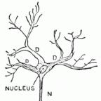 wikimedia: public domain