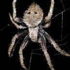 The free teaser image can be see at https://www.pinterest.com/BlackButlerFG/arachnid-kill-free-zone/