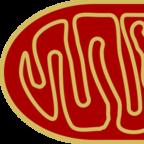 Wikimedia commons/Free Image