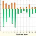 Brain Imaging and Behavior DOI 10.1007/s11682-016-9648-9