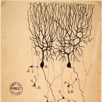 Santiago Ramón y Cajal/Public Doman