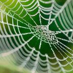 HellenGrig-Shutterstock
