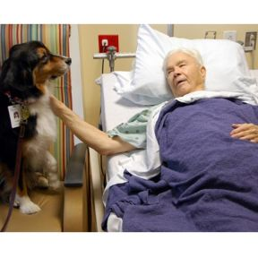 Can Therapy Dogs Help Cure Cancer?