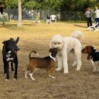 The free teaser image can be seen here -- http://101thingstodosw.com/palmsprings/palm-springs-dog-park/