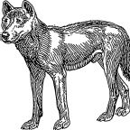The First Dogs in the Americas