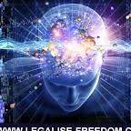 www.legalize-freedom.com