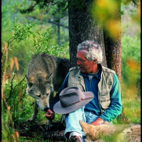 Wolves can be quite social toward people, as Jim Dutcher and his friend demonstrate.