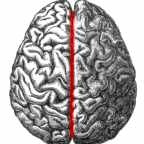 By Gray (File:Human brain.png) [Public domain], via Wikimedia Commons
