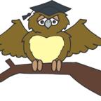 Owl, Graduate/Pixabay