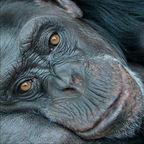 http://brookebessesen.com/blog/wp-content/uploads/2010/07/chimp.jpg