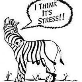 Why Stress Gets to Us, and How to Make It Stop