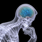 Shutterstock Image purchased by UCLA CNS for Dr. Gordon