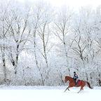 Horsemen/Shutterstock