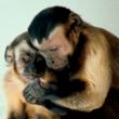 Frans de Waal, (K. Powell, PLOS Biology 2003)